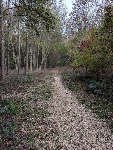 River Woodland Path improvements 3